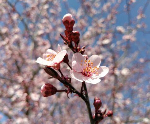 Springtime in Galicia